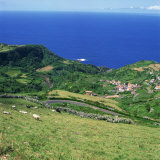 Cattle, Fields and Small Village on the Island of Flores in the Azores, Portugal, Atlantic, Europe Photographic Print by David Lomax