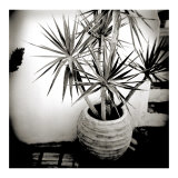 Polaroid of Small Palm in Plantpot, Santorini, Cyclades, Greek Islands, Greece, Europe Photographic Print by Lee Frost