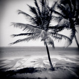 Palm Trees by the Beach at Bweju, Zanzibar, Tanzania, East Africa Photographic Print by Lee Frost