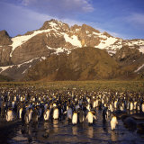 King Penguins, South Georgia, South Atlantic, Polar Regions Photographic Print by Geoff Renner