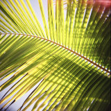 Green Palm Leaves, Jambiani, Zanzibar, Tanzania, East Africa Photographic Print by Lee Frost