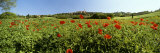 Poppy Field with Town of Pienza in Distance, Tuscany, Italy, Europe Photographic Print by Lee Frost