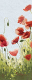 Mountain Poppies II Prints by Shirley Novak