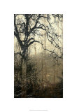 Wooded Solace I Limited Edition by Jennifer Goldberger