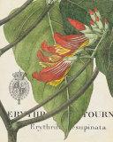 Botanique Tropicale I Art by Hugo Wild