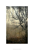 Wooded Solace III Limited Edition by Jennifer Goldberger