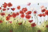 Mountain Poppies III Posters van Shirley Novak