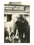 Elephants by Funeral Parlor Prints