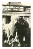 Elephants by Funeral Parlor Posters