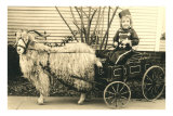 Girl with Ringlets in Goat Cart Posters
