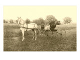 Man in Horse-Drawn Carriage in Grass Prints