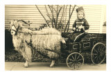 Girl with Ringlets in Goat Cart Print