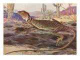 Striped-Neck Lizard in Desert Affiches