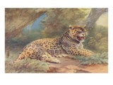 Leopard in the Jungle Posters
