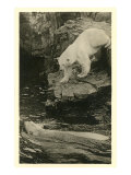 Polar Bear Descending into Water Prints