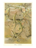 Lizards on Wall Poster