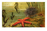 Underwater Scene with Starfish and Seahorses Posters