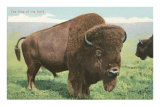 Buffalo on the Range Prints