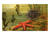 Underwater Scene with Starfish and Seahorses Poster