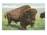 Buffalo on the Range Art