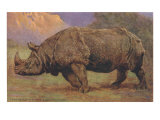 Charging Indian Rhinoceros Poster