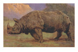 Charging Indian Rhinoceros Posters