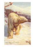 Polar Bear on the Prowl Art