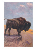 Buffalo on the Prairie Posters