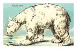 Sly Polar Bear Posters