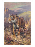 Tiger in the Grasslands Posters
