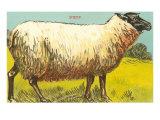 Black-Faced Sheep Posters