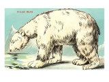 Sly Polar Bear Print