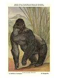 Highland Gorilla Poster