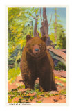 Grizzly Bear Prints