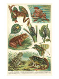 Variety of Amphibians Posters