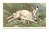 Alpine Hare Posters