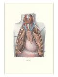 Autopsy of Chest Cavity Prints