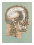 Cranial Bones Prints