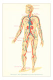 Schematic of Circulatory System Print