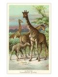 Giraffes Art