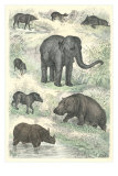 Variety of Mammals Prints