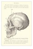 Vintage Illustration of the Skull Posters