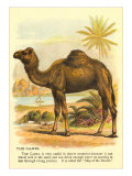 Camel by the Nile Posters