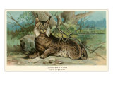 European Lynx Prints