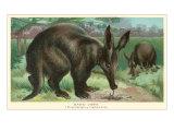 Aardvarks Posters