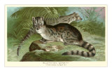 Blotched Genet Prints