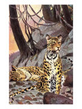Leopards in the Hills Art