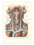 Circulation in the Neck Art
