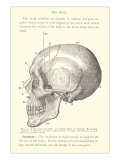 Vintage Illustration of the Skull Art