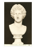 Bust of Apollo Posters